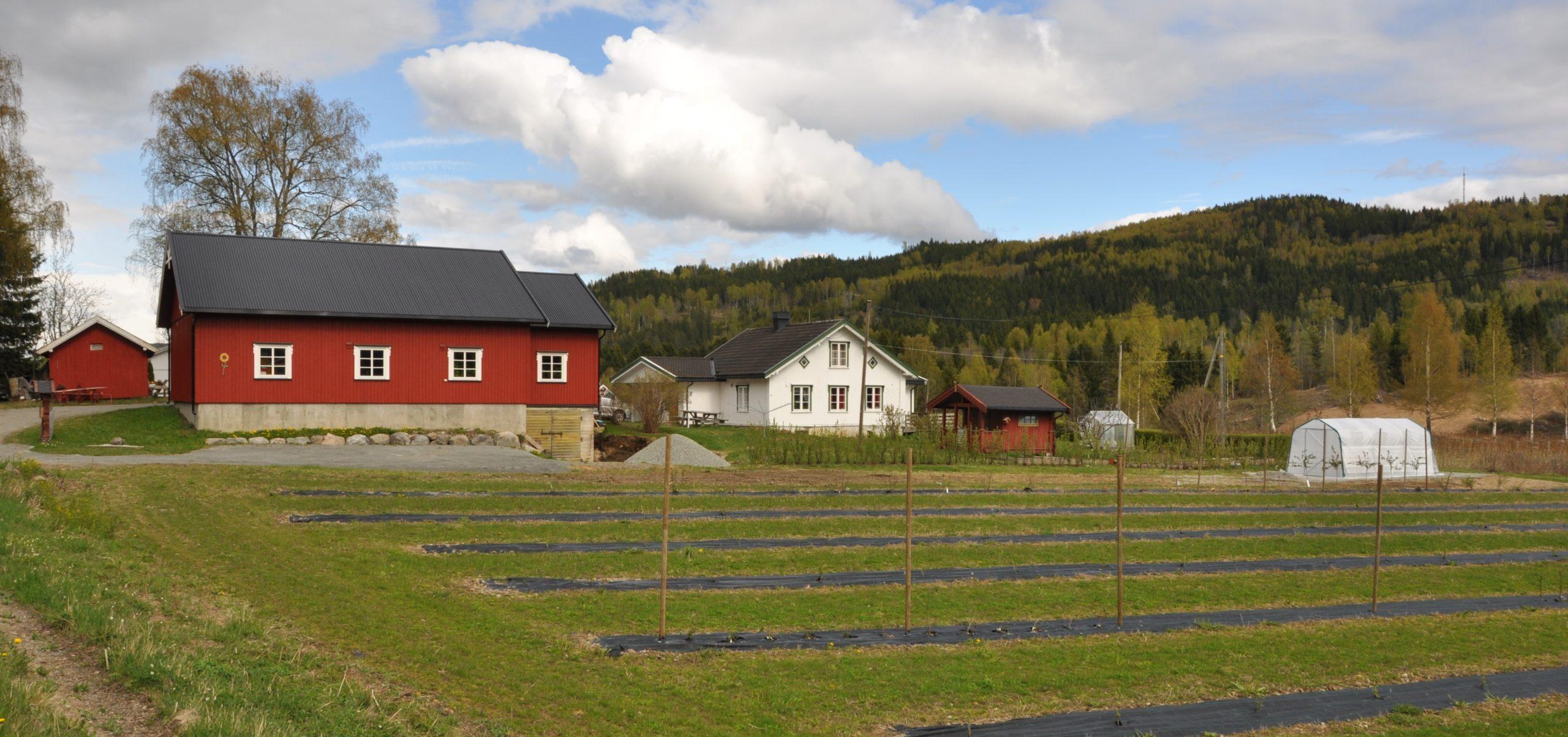 Fremstad gård - bærproduksjon